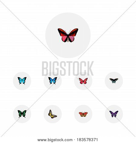 Realistic Azure Peacock, Polyommatus Icarus, Callicore Cynosura And Other Vector Elements. Set Of Moth Realistic Symbols Also Includes Butterfly, Peacock, Cypris Objects.