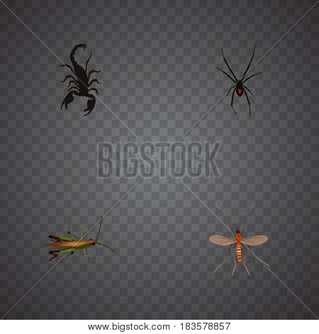 Realistic Locust, Spinner, Poisonous And Other Vector Elements. Set Of Hexapod Realistic Symbols Also Includes Arachnid, Spinner, Poisonous Objects.