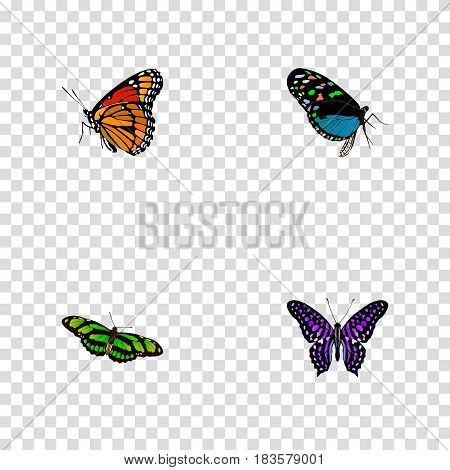 Realistic Polyommatus Icarus, Hairstreak, Green Peacock And Other Vector Elements. Set Of Beauty Realistic Symbols Also Includes Brown, Fly, Green Objects.