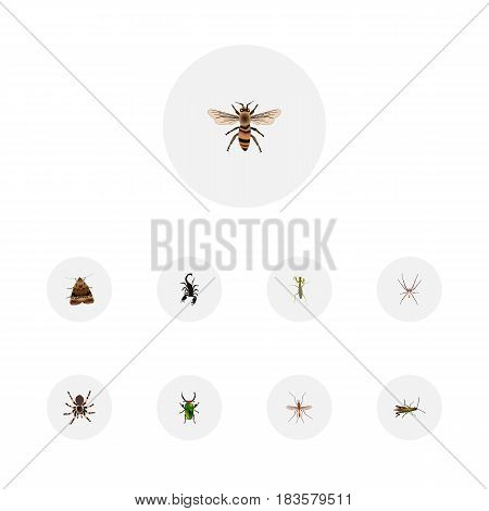 Realistic Poisonous, Butterfly, Spider And Other Vector Elements. Set Of Animal Realistic Symbols Also Includes Moth, Wasp, Poisonous Objects.