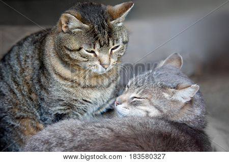Two cats lying nearby and purring. Spring tenderness