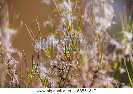 The beauty of autumn grasses is a lyrical mood.