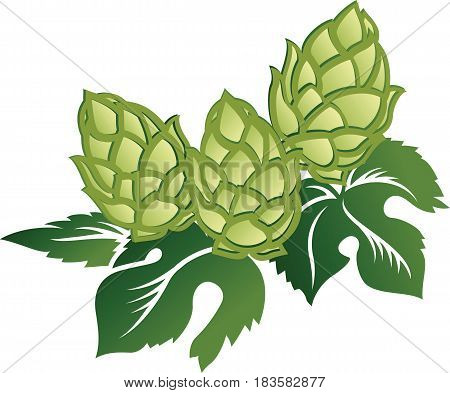 Green leaves and hop cones isolated on white background decorative vector illustration.