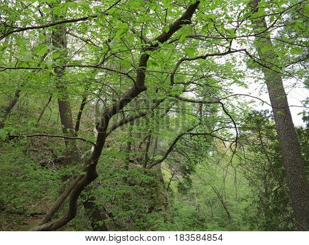 Sac Canyon in spring with nice shades of green at Starved Rock State Park in Illinois