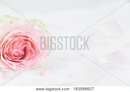 Floral styled stock photography with white copy space for your own business message promotion headline great for blogging and social media campaigns