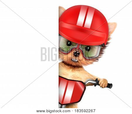 Funny racer dog sitting on a red bike, helmet and wearing aviator goggles. Sport and championship concept. Clipping path.