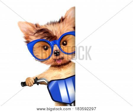 Funny adorable puppy sitting on a bike with blue sunglasses, isolated on white. Delivery concept. Realistic illustration of yorkshire terrier with clipping path