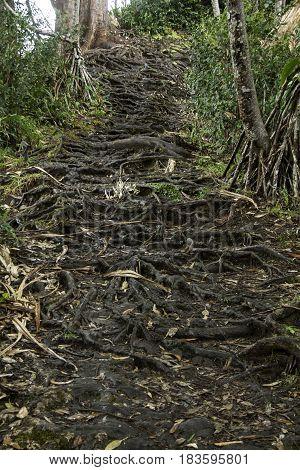 Rainforest Nature trails.  Hana Highway, Maui, Hawaii, USA