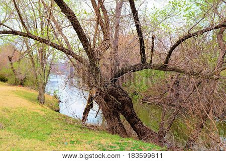 Spring leaf buds on trees beside a creek taken at a riparian woodland in the Great Plains of America