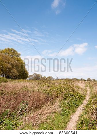 A Nice Lush Landscape Shot Of Shrub Land In Essex Countryside With A Clear Blue Sky And Bits Of Clou