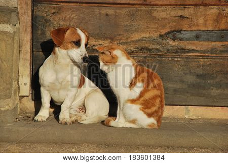 A Cat and a  Dog outside the Cottage