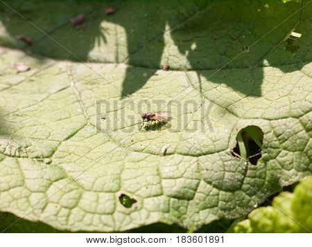 A Very Close Up Shot Of A Fly Resting Upon A Leaf Its Eyes In Focus And Detail