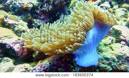 Coral Polyp In The Red Sea