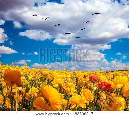Flock of migratory birds fly beneath the clouds. The southern sun illuminates the flower fields. Concept of rural tourism
