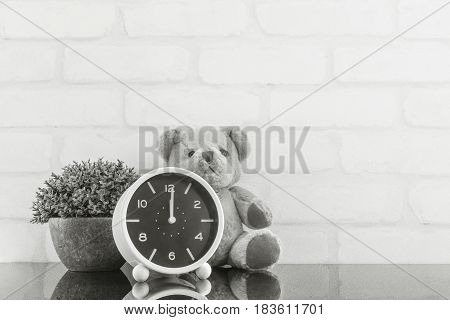 Closeup alarm clock for decorate in 12 o'clock with bear doll and plant on black glass table and white brick wall textured background in black and white tone with copy space