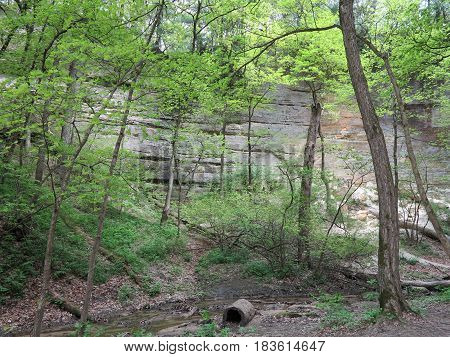 St. Louis Canyon at Starved Rock State Park in spring with various shades of green from trees contrasting against sandstone and limestone canyon walls.