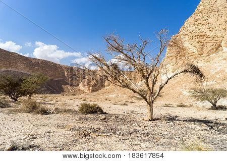Hiking in mideast stone desert tourism israel