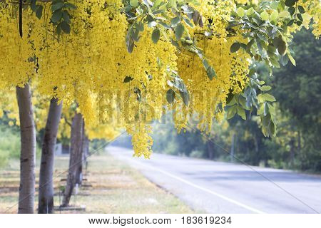 background nature yellow flowers beside road colorful