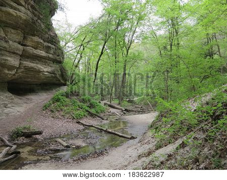 Sandstone and Limestone walls with new spring tree growth offer beautiful contrast at St. Louis Canyon in Starved Rock State Park