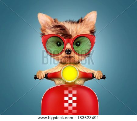 Funny adorable puppy sitting on a red motorbike and wearing sunglasses, isolated on color background. Delivery concept. Realistic 3D illustration with clipping path