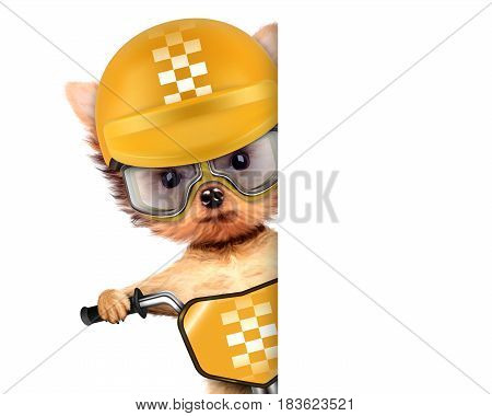 Funny adorable puppy sitting on a bike with yellow helmet and aviator goggles, isolated on white. Delivery concept. Realistic 3D illustration with clipping path