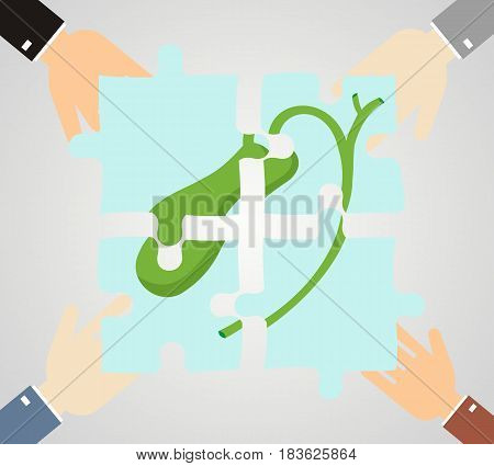 Healthcare concept. Hands hold pieces puzzle of gallbladder.