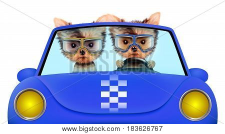 Couple of puppies sitting in the blue cabriolet, isolated on white background. Vacation and travel concept concept. Realistic 3D illustration with clipping path