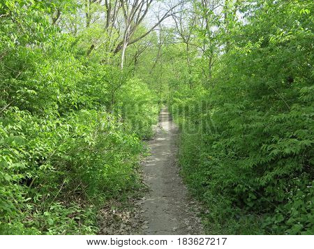 Beautiful shades of green with new tree growth along one of the many paths at Starved Rock State Park