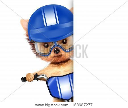 Funny adorable puppy sitting on a bike with blue helmet and aviator goggles, isolated on white. Delivery concept. Realistic 3D illustration with clipping path