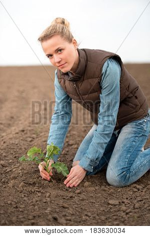 Spring planting in the field woman agronomist