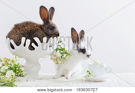 the two rabbits in vase  on white background