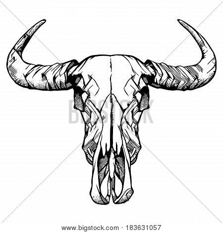 Buffalo skull- hand drawn vector, isolated on white. Vector illustration.