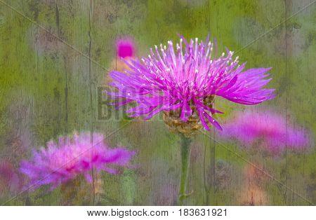 Textured toned vintage image of wild flowers in summer season.