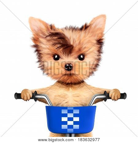 Funny adorable puppy sitting on a bicycle with blue basket, isolated on white. Delivery concept. Realistic 3D illustration of yorkshire terrier with clipping path
