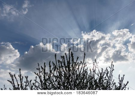 Bright sunrays over dark clouds and tree with blossoms