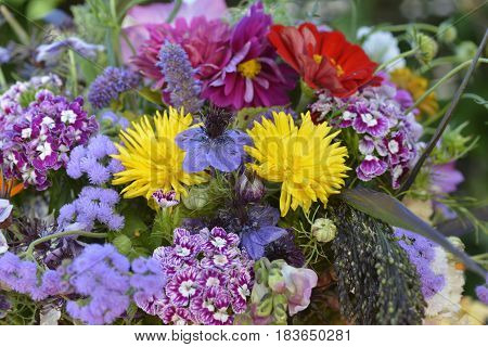 This close up of a colourful summer bouquet shows a nice collection of brightly coloured flowers. The Nigella flower in the centre truly steals the show.