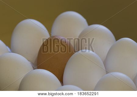 Light and dark eggs concept concord in multiethnic team all hands together