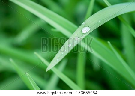 water drops on green grass macro can be background