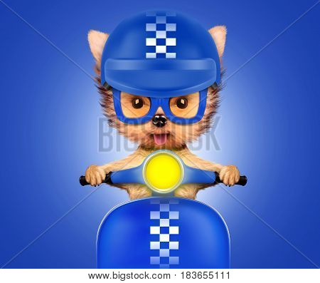 Funny adorable puppy sitting on a blue motorbike, isolated on color background. Delivery concept. Realistic 3D illustration with clipping path