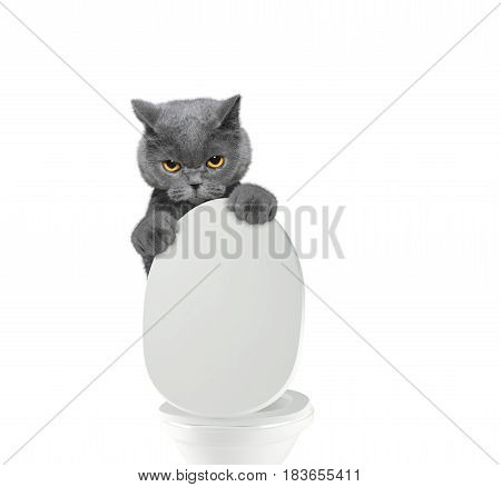 Cute cat pooping into toilet bowl -- isolated on white