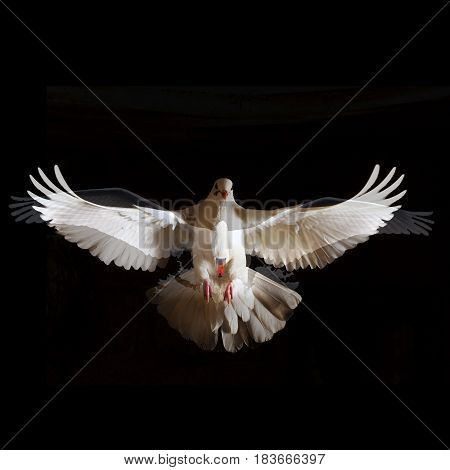 two white bird with open wings fly free from darkness concepts of freedom and liberation from something