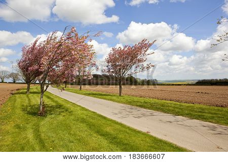 Road And Springtime Blossom