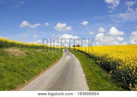 Road And Oilseed Rape Crop