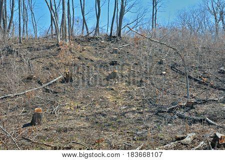 A landscape in forest after defotistation. Russian Far-East/