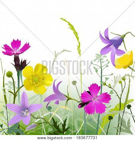 Meadowflowers-g