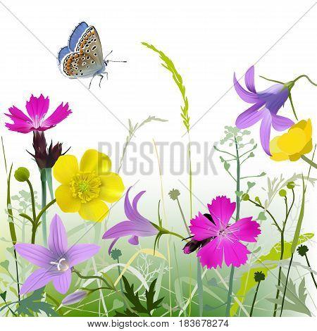 Meadowflowers-gb