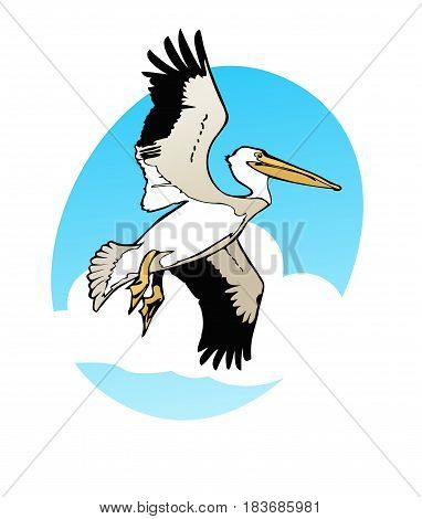 Pelican soaring through a sunny sky outdoors