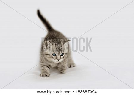 Charming kitten tender age. Striped baby cat isolated on white.