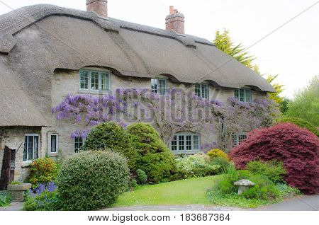 Large Country cottage with wisteria on walls