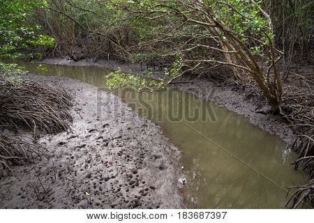 View of a small stream curving through the muddy wetlands of a mangrove forest Rayong Thailand. Nature and conservation concept.
